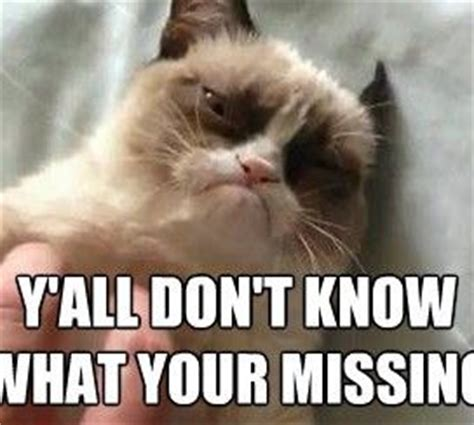 Grumpy Cat Meme Creator - 17 best images about meme on pinterest birthday memes