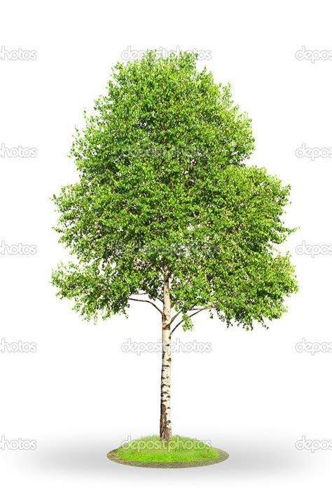6 ft birch cluster tree 54 best images about puppet ideas tree plays on sun clip and