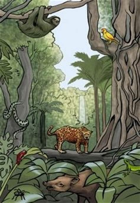 jungle book themes analysis 1000 images about rain forest on pinterest rainforests