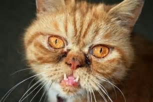 best pictures of cats and more ugly cat picture