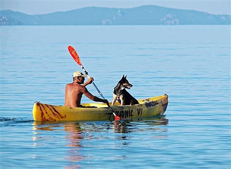 round kayak boat free photo boat oars man dog water paddle free