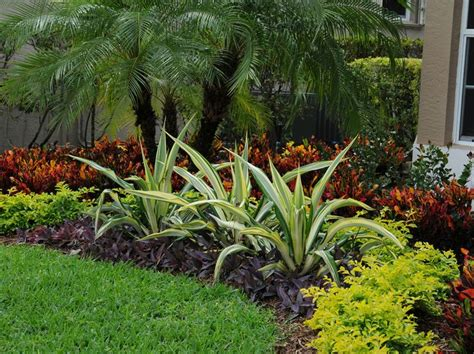 florida landscaping plants 25 best ideas about tropical gardens on