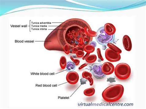 blood test sed rate erythrocyte sedimentation rate esr