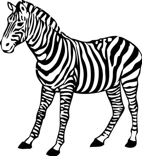 clipart zebra zebra free stock photo illustration of a zebra 11288