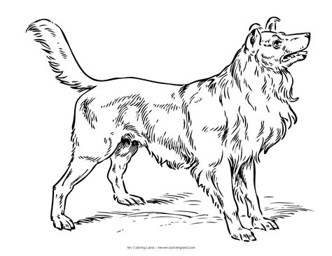 realistic dog coloring pages  bestofcoloringcom