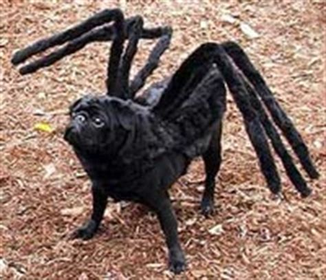 spider pug costume the 6 best costumes on the