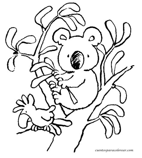 imagenes para colorear koala dibujos para colorear koalas