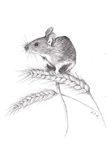 Mouse Pen Drawing Field Mouse By Viuru On Deviantart