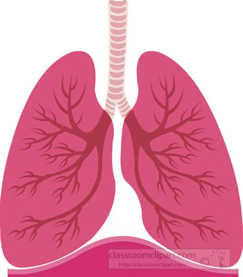 clipart lungs lungs clipart clipground