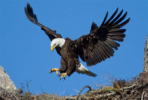The Eagle Has Landed by The Eagle Has Landed Yesterday Was One Of My Most