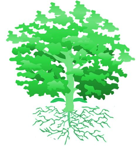 symbolism of trees gallery oak tree symbols