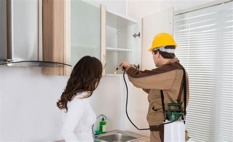 blatte in casa come eliminarle blatte in casa grosso rischio per la salute come