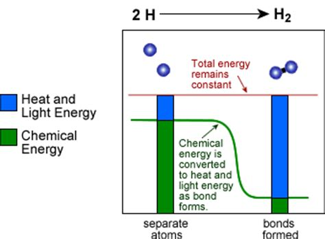 how is light energy converted into chemical energy during photosynthesis types of potential energy