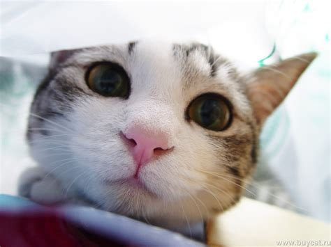 cat pictures cats images cats hd wallpaper and background photos