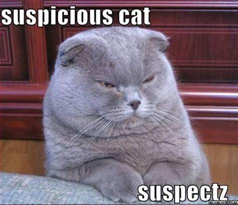 Suspicious Meme - suspicious cat suspectz memes com