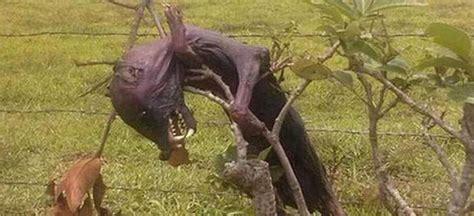 imagenes de brujas mitologicas nahual encontrado en mexico 191 real taringa