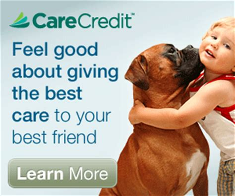 care credit for dogs carecredit sunnycrest animal care center
