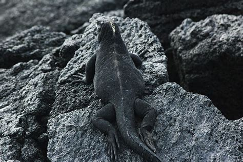 last minute offers to the galapagos islands september 2018