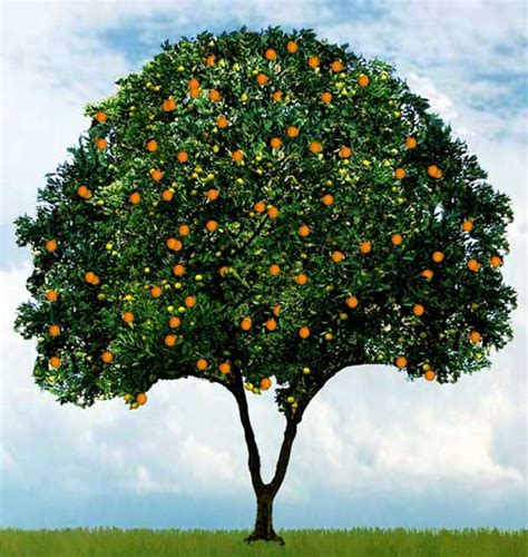 you can tell a tree by the fruit it bears how do you tell a true believer faith talk ministries
