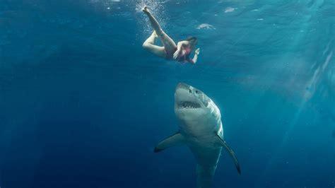 boat spray painting brisbane australian shark attacks fact vs fiction lifehacker