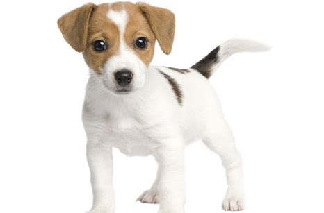 hill s healthy advantage puppy airport animal hospital kitten puppy hill s 174 healthy advantage promotion ends