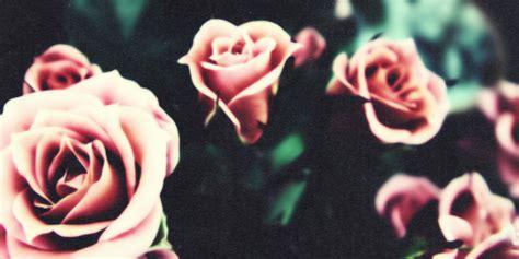 tumblr themes roses sensazioni contrastanti