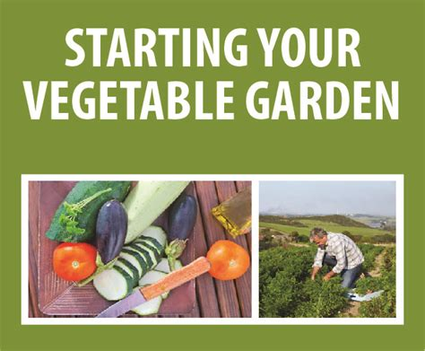 Starting Your Vegetable Garden Whatcomtalk Starting A Fruit And Vegetable Garden