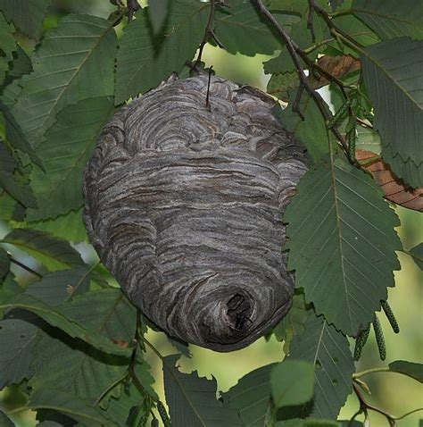 What Of Bees Make Paper Nests - professional services archives pocono tick and