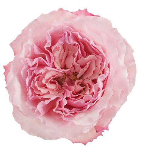 mayra flower mayra
