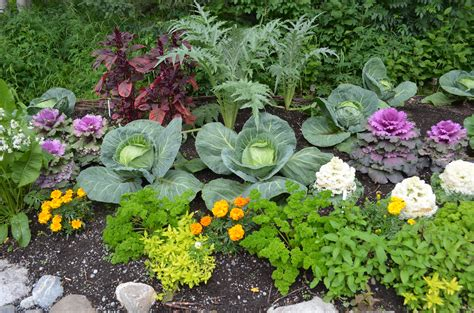 My Own Personal Jungle Part 3 Vegetable And Flower Garden