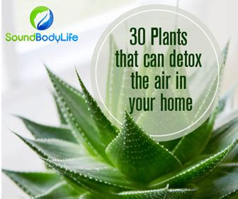 Plantlife Detox by 30 Plants That Can Detoxify The Air In Your Home