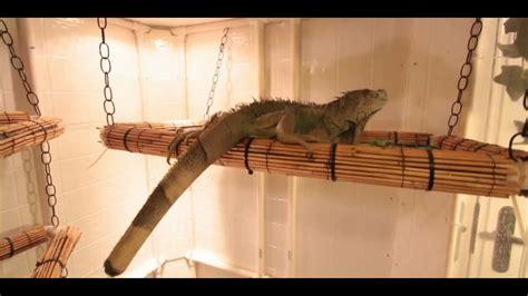 set   iguana cage small pets youtube