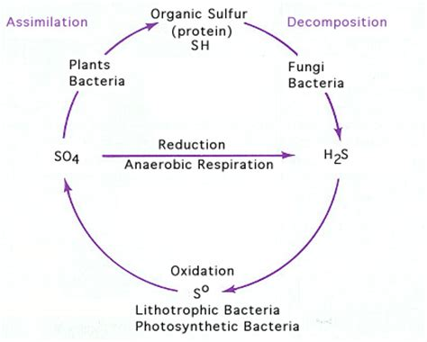 cyclic pattern definition definition of sulfur cycle