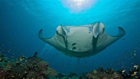 underwater restaurant stock image image of luxe kihavah image gallery maldives underwater