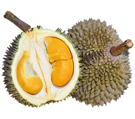 durian party menu durian party provider  singapore