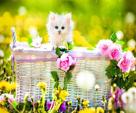 sweet cat mobile phone wallpapers 480x800 hd wallpaper 960x800 mobile phone wallpapers download 97 960x800