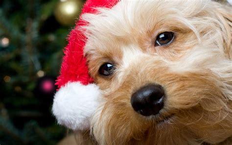imagenes feliz navidad con perros imagenes de perritos de navidad imagui