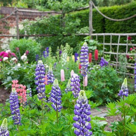 Country Garden Ideas Lupins And Peonies Country Gardens Housetohome Co Uk