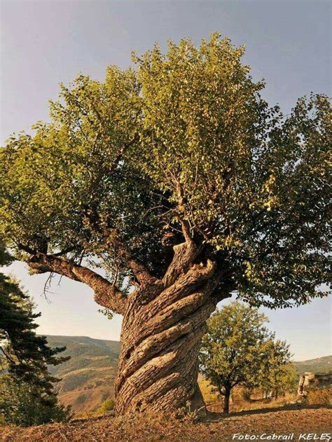 tree biography in english 1000 ideas about strange art on pinterest sculpture