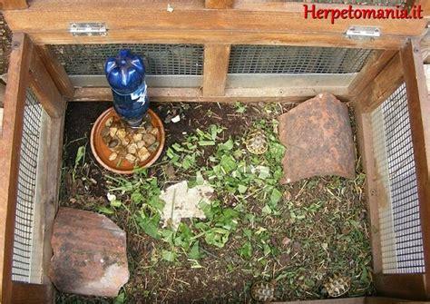 alimentazione tartaruga terrestre riproduzione tartarughe terrestri