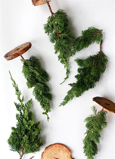 real miniature christmas trees