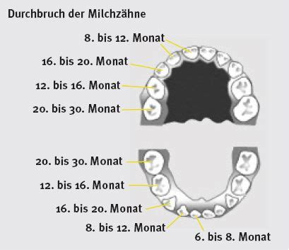 wann kommen die zähne bei kindern milchz 228 hne alles was sie wissen m 252 ssen elternwissen