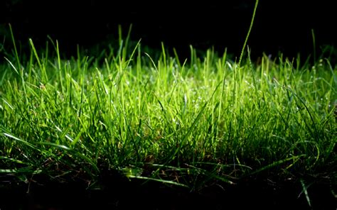 whatsapp wallpaper grass 10 beautiful green grass wallpapers