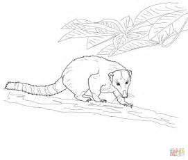 coloring book pages western western mountain coati coloring coloring