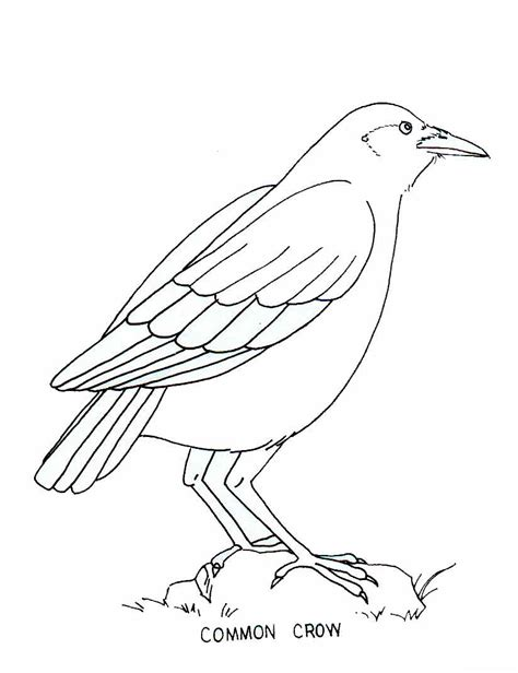 coloring pages birds and insects birds and insects coloring pages coloring pages for free