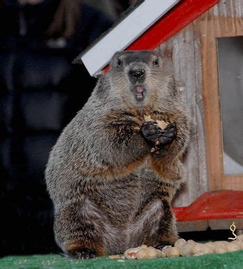 groundhog day 2015 staten island zoo celebrating july fourth in new york city