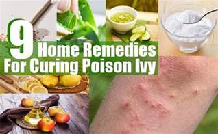 home remedies for poison oak 9 top home remedies for curing poison find home