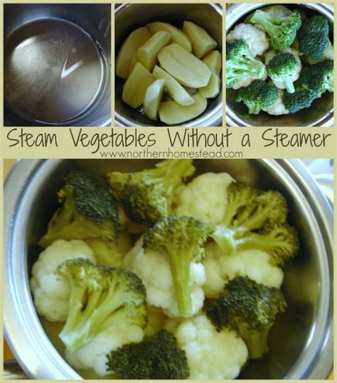 vegetables you can steam 25 b 228 sta steamed vegetables id 233 erna p 229 gr 246 na