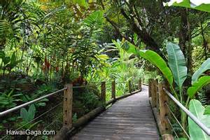 Hawaii Botanical Garden Hawaiian Tropical Botanical Garden Big Island