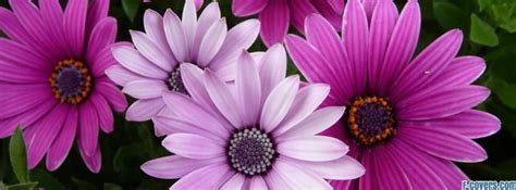 cover photos for facebook timeline about flowers www imgkid com the image kid has it